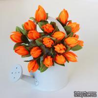 Подснежники оранжевые, 20 шт.