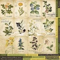 Карточки Botany summer (рус.), ТМ Фабрика Декору