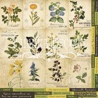 Карточки Botany summer (укр.), ТМ Фабрика Декору