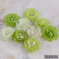 ЦЕНА СНИЖЕНА! Набор цветов Prima - Lady Godivas - Limeade