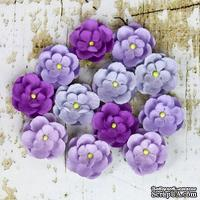 Набор цветов Prima - Avante - Lilac