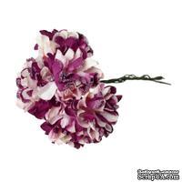 Астры, цвет фиолетовый/белый, 9 см, букетик, 6шт.