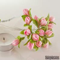 Подснежники розовые, 20 шт.