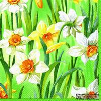 "Салфетка для декупажа ""Нарциссы"", цвет фона: светлый зеленый, размер: 33х33 см"