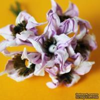 Цветы бело-cиреневые, диаметр 3-4 см, 6 шт.