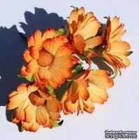 Оранжевые ромашки, 5 шт.
