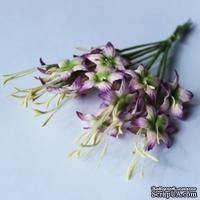 Гладиолусы, цвет бело-сиреневый, 25 мм, 10 шт.