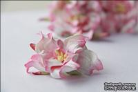 Гардения, диаметр 5 см, цвет розово-белый, 1 шт.