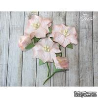 Набор цветов TM Iris - Blossom Персиковые, 5 шт