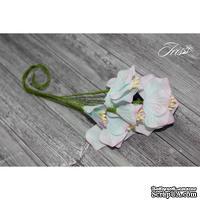 Набор цветов TM Iris - Vanille flowers Северное сияние, голубые с розовым, 5 шт