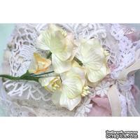 Набор цветов TM Iris - Vanille flowers Солнечный день, кремовые с желтым, 5 шт