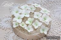 Набор гортензий белого цвета с зеленой серединкой, ТМ Iris, 22-33 мм, 15 шт - ScrapUA.com