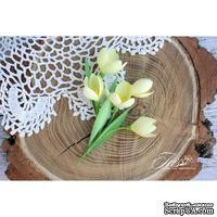 Набор цветов TM Iris - Крокусы желтые, 5 шт