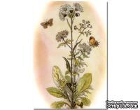Акриловый штамп La Blanche - Meadow Flower