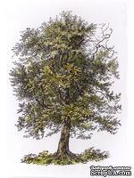 Акриловый штамп La Blanche - Old Oak Stamp