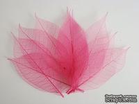 Скелетированные листья Skeleton Rubber leaves, цвет розовый, 5-7 см, 10 шт.