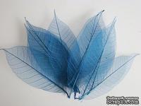 Скелетированные листья Skeleton Rubber leaves, цвет голубой, 5-7 см, 10 шт.