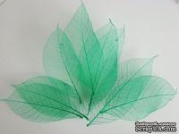 Скелетированные листья Skeleton Rubber leaves, цвет зеленый, 5-7 см, 10 шт.