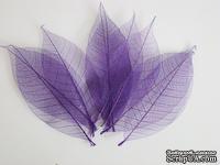 Скелетированные листья Skeleton Rubber leaves, цвет фиолетовый, 5-7 см, 10 шт.