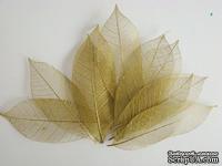 Скелетированные листья Skeleton Rubber leaves, цвет золотистый, 5-7 см, 10 шт.