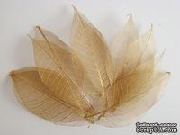 Скелетированные листья Skeleton Rubber metallic leaves, цвет медный, 5-7 см, 10 шт. - ScrapUA.com