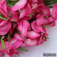 Польская гортензия, цвет розовый