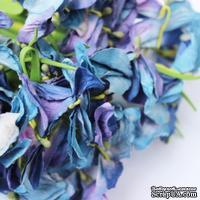 Польская гортензия, цвет фиолетово-синий