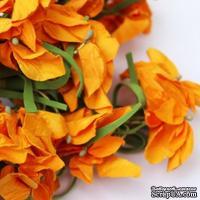 Польская гортензия, цвет оранжевый