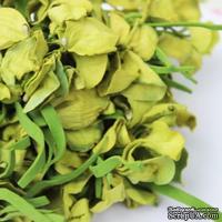 Польская гортензия, цвет зеленый