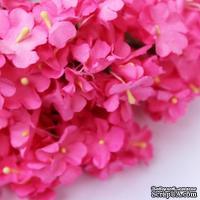 Анютины глазки, цвет розовый