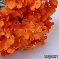 Анютины глазки, цвет оранжевый
