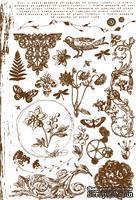Флоковые натирки от компании Prima - Botanical