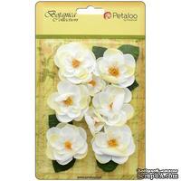 Набор цветов Petaloo - Botanica Ranunculus - White