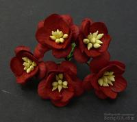 Цветы вишни, цвет темно-красный, диаметр - 25мм, 5 шт.