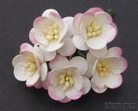 Цветы вишни, цвет белый с розовым, диаметр - 25мм, 5 шт.