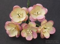 Цветы вишни, цвет розово-кремовый, диаметр - 25мм, 5 шт.