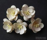 Цветы вишни, цвет слоновой кости темный, диаметр - 25мм, 5 шт.