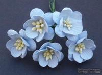Цветы вишни, цвет нежно-голубой, диаметр - 25мм, 5 шт.