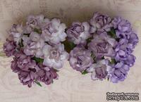 Набор садовых роз - Cottage roses, лиловый микс, 25 мм, 20 шт.