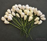Набор тюльпанов (белые и кремовые оттенки), 10мм, 10 шт.