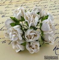 Бутоны большие дикой розы, цвет белый, размер бутона 2 см, 1шт.