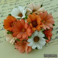 Ромашки, микс цветов (персиковый, оранжевый, белый), 45мм, 5 шт.