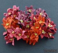 Набор лилий, микс цветов (красные оттенки), 30мм, 40 шт.
