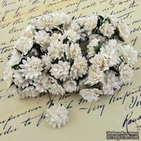 Астры от Thailand,  цвет белый, 15мм, 10 шт