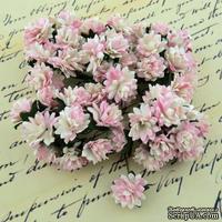 Астры от Thailand, цвет нежно-розовый/бежевый, 15мм, 10 шт