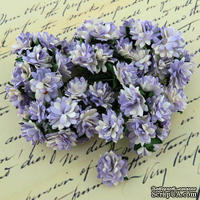 Астры от Thailand, цвет лиловый, 1,5 см, 10 шт