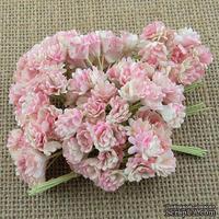 Гипсофила от Thailand, цвет бежевый/розовый, 10 шт