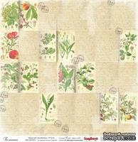 Бумага для скрапбукинга от ScrapBerry's  30х30см  односторонняя Ботаника