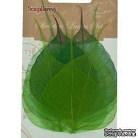Скелетированные листики из баньянового дерева, 10х6,5 см, набор 8 шт., зеленые