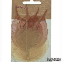 Скелетированные листики из баньянового дерева, 10х6,5 см, набор 8 шт., коричневые